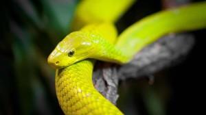 gelb-schlange-tapete-papagei,1600x900,65250