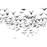 Vogelzugforschung
