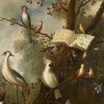 Warum singen Vögel? – DVD