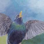 Neues Buch: Warum singen Vögel?