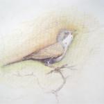 Vögel singen – ohne Honorar und ohne Manager