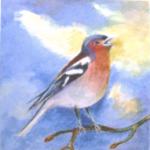Waarom zingen vogels?